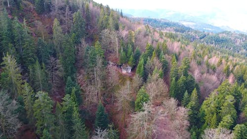 Drone Footage Of Lined Up Trees Along The Mountain