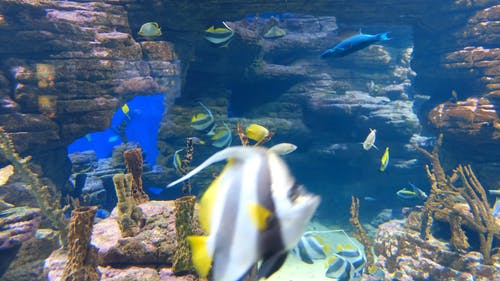 Different Kind Of Fishes As Part Of The Vast Marine Life