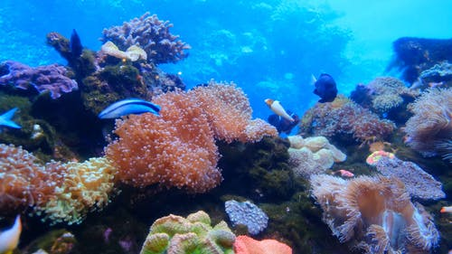 Marine Life Of Fishes And Corals Underwater