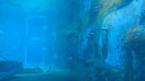 ウォーターパークの魅力として危険なサメでいっぱいの水族館