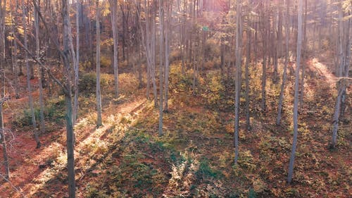 Slow Motion Footage Of The Forest Using Drone