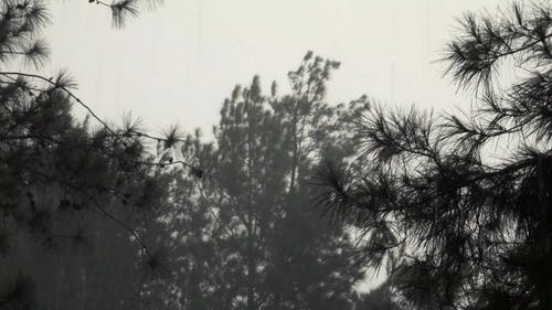 Trees Swaying in the Wind on a Stormy Day