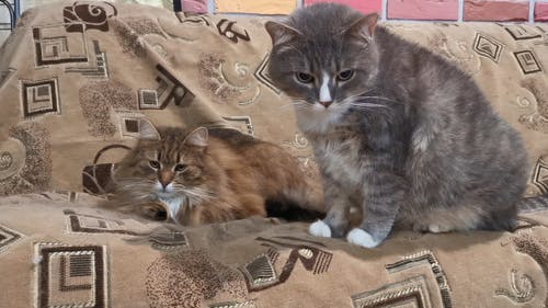 Brown And Gray Cats On A Couch