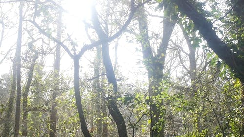 The Bright Light Of The Sun Over The Forest
