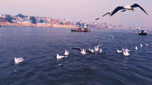 Seabirds Flying Under A Blue Sky