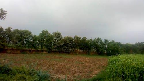 Wind Blowing Through A Sugarcane Plantation