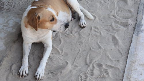 Footage Of The Dog Chilling In The Sand