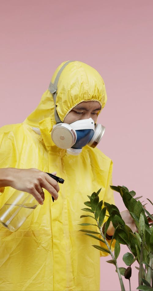A Man In Protective Suit Spraying A Plant