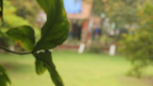 Blurred Footage of a Leaf Outdoors