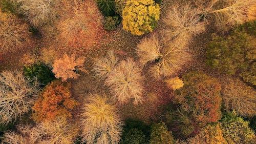 Aerial Footage of Trees During Autumn Season