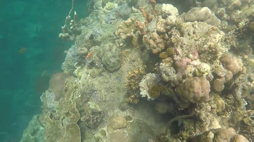 Underwater Video Footage Of Marine Lives