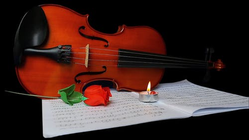 Red Rose in Front of a Violin