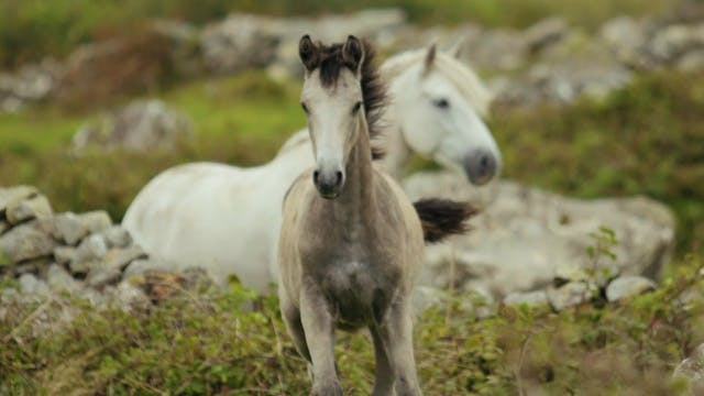 Horse Running On Grassland