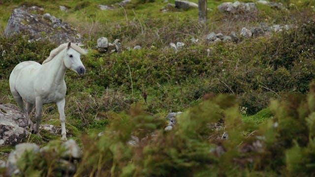 A White Horse In An Open Field