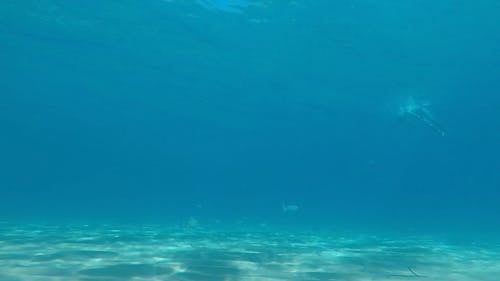 A Man Swimming Under The Seawater