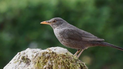 Close Up Video of a Bird