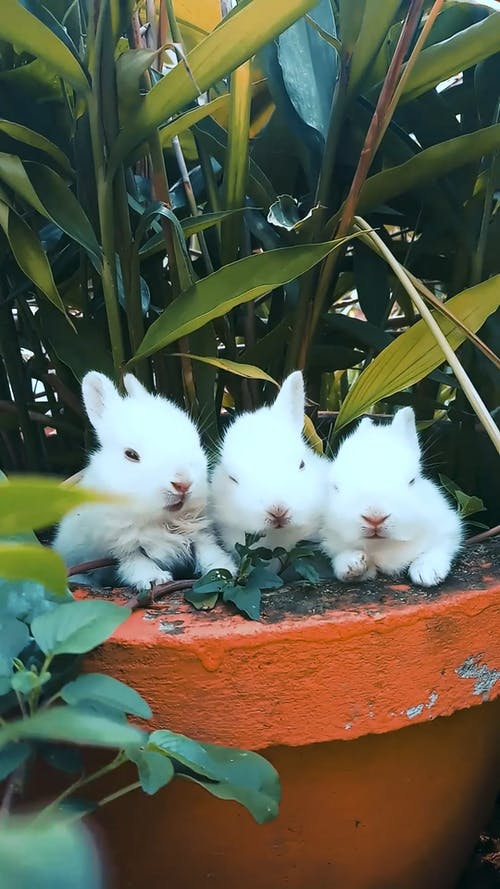 Rabbits Resting On A Pot With A Plant