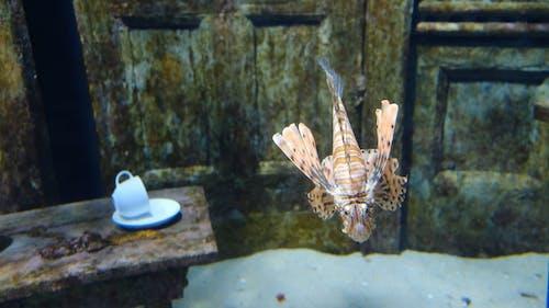 Fish Swimming Inside An Aquarium