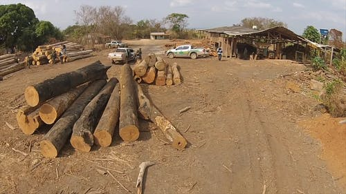 Government Agency Inspecting A Logging Business