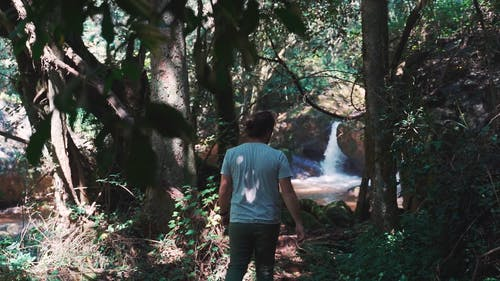 A Man Admiring The Natural Beauty Of The Forest