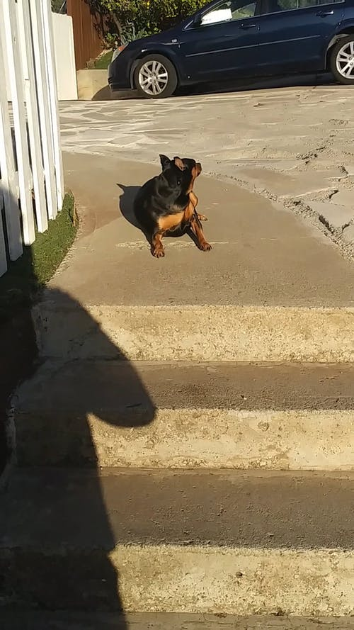 A Man Encouraging His Pet Dog To Go Down The Stair Steps