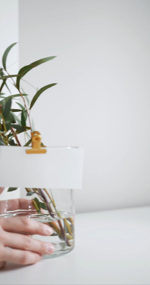 Placing A Water Plant On A Vase Over The Table