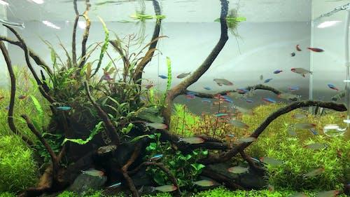 Fishes Inside An Aquarium