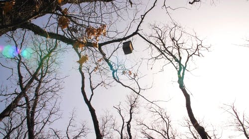 A Bird House Hanging On A Tree Branch
