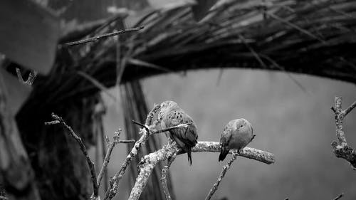 Birds Perched On Tree Stems On A Rainy Day