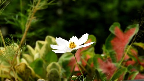 A Flowering Plant Dancing By The Wind Blows