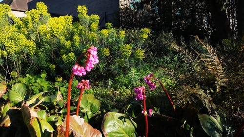 A Shot of a Garden on a Sunny Day