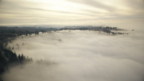 A Drone Shot of Tree Lines from Above the Clouds