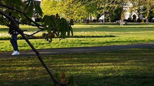 People Walking The Park