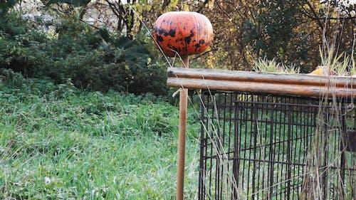 Using Pumpkin As A Shooting Target