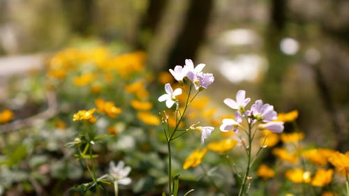 Flower Bearing Plants In The Garden