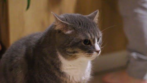 A Close-up Shot of a Pet Cat