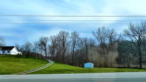 A View of the Forest From a Moving Vehicle