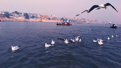 A Flock Of Birds Flying Above The Sea Water
