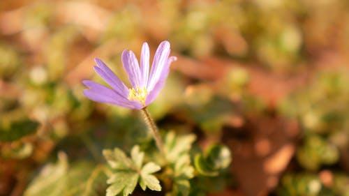 A Close-up Shot of a Flower