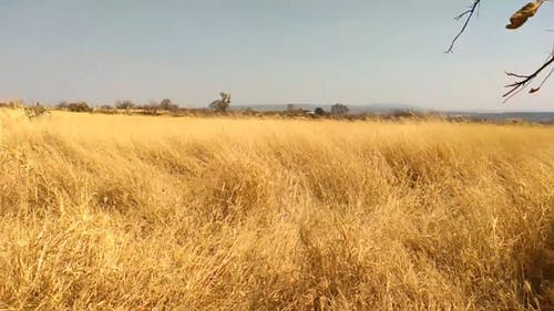 Video Of A Dried Grass Field