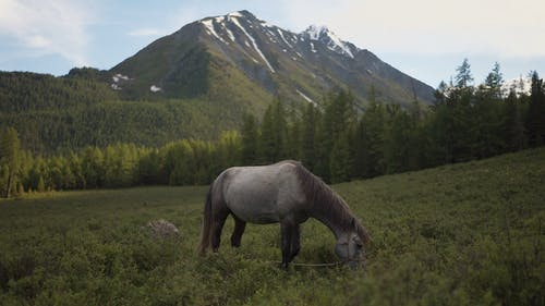 View Of A Horse Feeding On Grass At Highland Pasture
