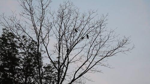 Birds on a Deciduous Tree
