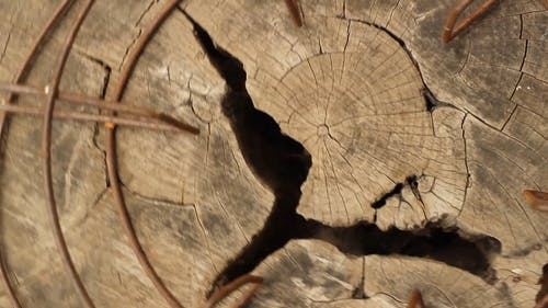 Revolving Shot of Chopped Wood