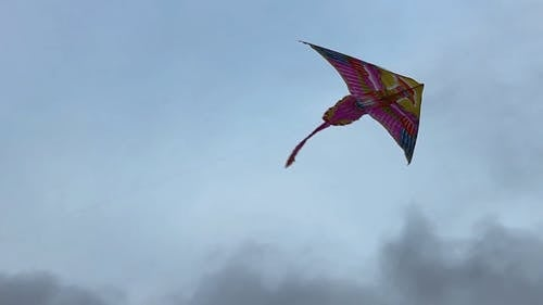 Flying A Kite With A Phoenix Bird Design
