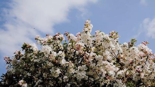 A Shot of Flower Tree on a Blue Sky