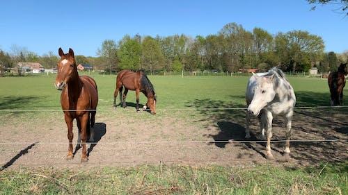 Horses Inside The Farm Run-in Shelter