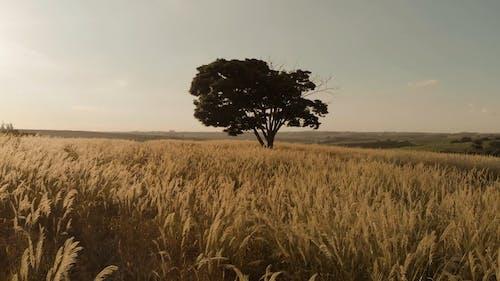 Sunset Over A Golden Wheat Field