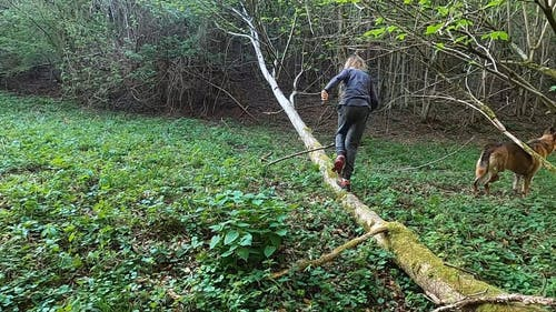 A Young Teen Walking On The Trunk Of An Uprooted Tree
