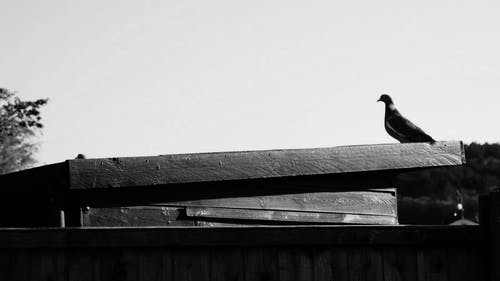 Pigeons Perched On A Roof
