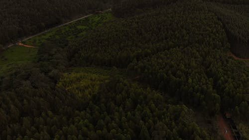 Drone Footage Of Tree Canopies In A Dense Forest